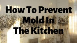 How To Prevent Mold In The Kitchen